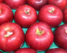 港南台からこだわりの紅玉のタルトとりんごのパイ